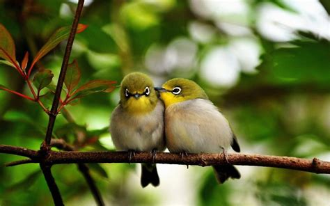 cute birds wallpaper 710261