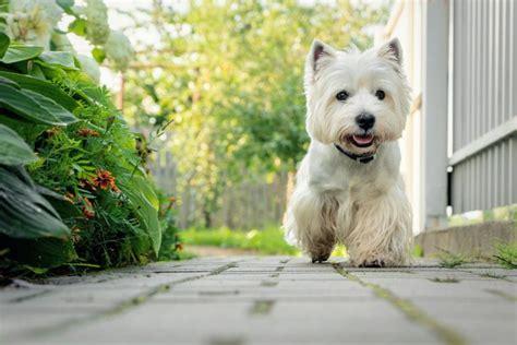 5 สายพันธุ์น้องหมาขนสีขาวสุดฮิต | Bishopbark