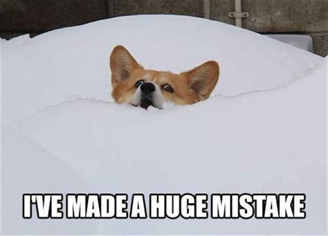 Corgi Memes - 7 times corgi memes got you through your day