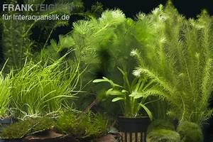 Welchen Dünger Für Aquarienpflanzen : aquarienpflanzen sortiment garnelenaquarium f r 100 120 ~ Michelbontemps.com Haus und Dekorationen