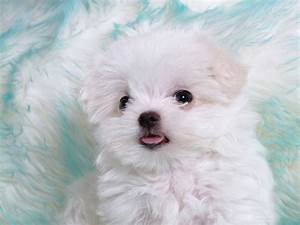 adorable puppy - Puppies Picture