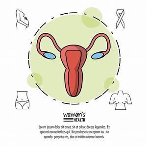 Diagram Of Pregnant Uterus