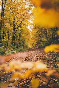 Colors of Autumn Tumblr
