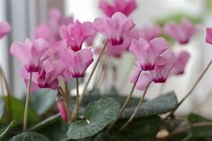 I 5 fiori per il balcone da coltivare in autunno e in inverno DeAbyDay tv