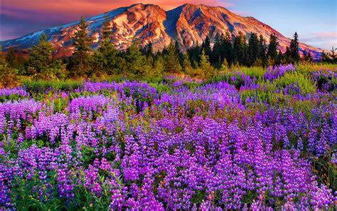 fond d écran fleur fond ecran gratuit fleurs inspiration de d 233 coration