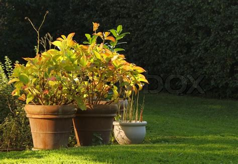 Blumen Im Garten Herbst by Herbst Blumen Im Garten Stockfoto Colourbox