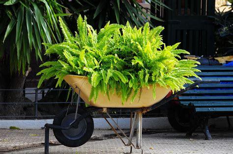 wheelbarrow planter ideas 27 wheelbarrow flower planter ideas for your yard home