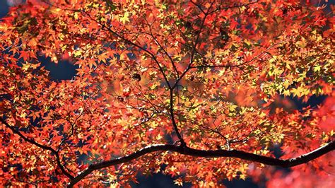 Autumn Wallpapers For Mac by 1920x1080 Autumn Colors Desktop Pc And Mac Wallpaper