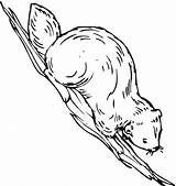 Coloring Beaver Pages Animals Coloringpages101 sketch template