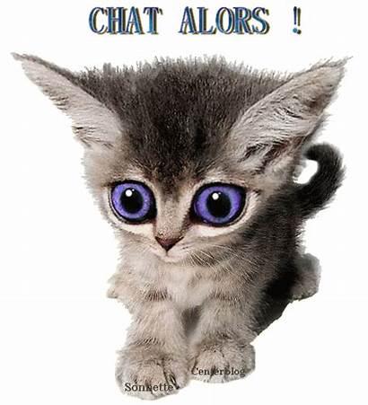 Chat Humour Chaton Bonne Centerblog Fin Gifs