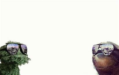 Oscar Grouch Sloth Wallpapers Funny Money Wallpapercave