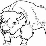 Bison Coloring 1252 Animals Pages Kb sketch template