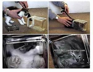 Bonsai Im Glas : bonsai kitten die katze im glas was ist wirklich dran giga ~ Eleganceandgraceweddings.com Haus und Dekorationen
