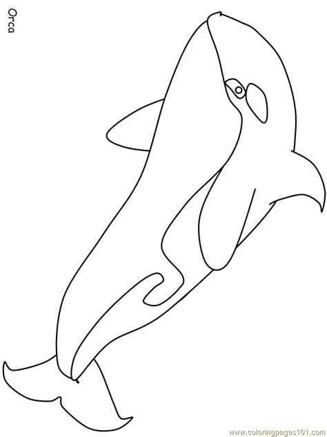 orca whale coloring page  whale coloring pages