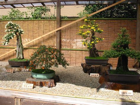 japanese garden bonsai chrysanthemum bonsai in japan the garden lady