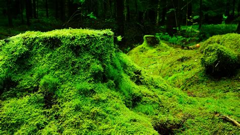 nature moss plants forest trees leaves wood