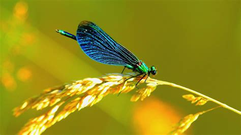 Animated Dragonfly Wallpaper - dragonfly wallpaper 183