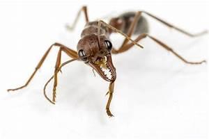 Ameisen Bekämpfen Im Garten : ameisen richtig bek mpfen ~ Frokenaadalensverden.com Haus und Dekorationen