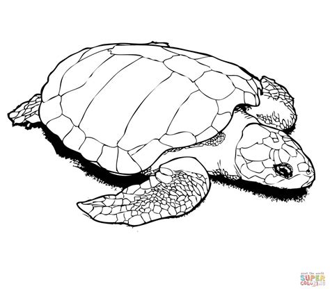 nesting kemps ridley sea turtle coloring page