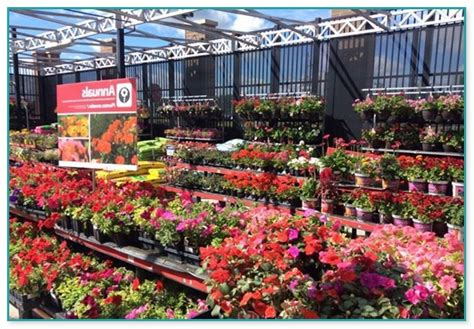 walmart garden center flowers garden grove ca