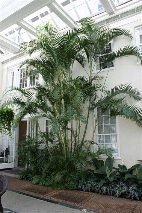 Palmeira areca em toda a sua plenitude #palmbeachgardens ...