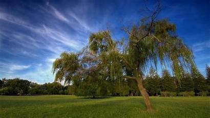 Tree Wallpapers Trees Nature Background Backgrounds 1080p