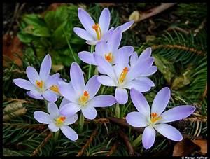 Blumen Im Frühling : blumen im fr hling 19 m rz 2010 ~ Orissabook.com Haus und Dekorationen