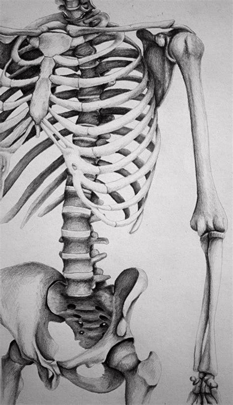 Skeletal Torso Melissa Pencil Drawing
