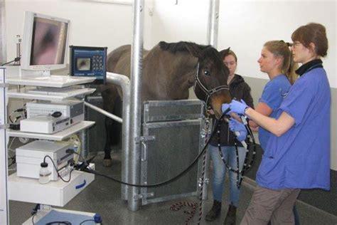 Magengeschwür Pferd Behandlungsdauer