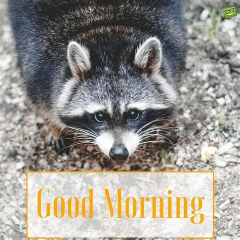 cute funny good morning images  memes  animals