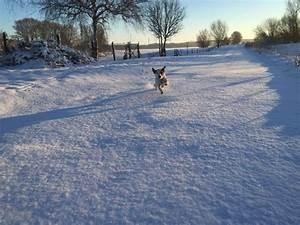 Sprüche Winter Schnee : tiere im schnee ~ Watch28wear.com Haus und Dekorationen