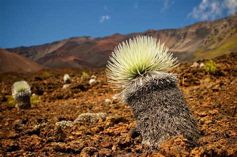 วอลเปเปอร์ : พืชพันธุ์, ระบบนิเวศ, ถิ่นทุรกันดาร, ท้องฟ้า, Shrubland, ปลูก, ดิน, หิน, ภูเขา, แค ...