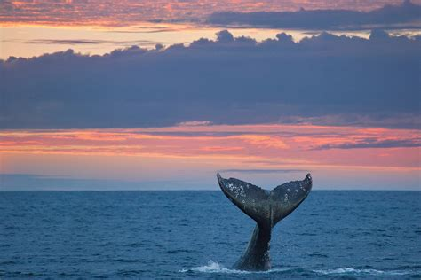 insiders guide  seattle gray whale watching
