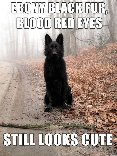 Funny Wolf Memes - 24 most funny wolf images