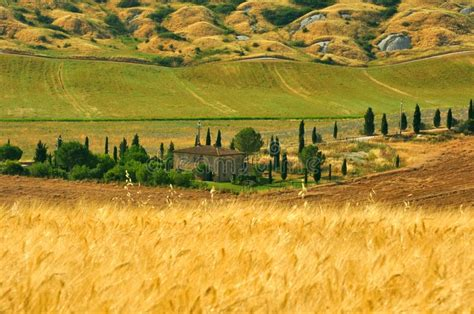 wheat fields  tuscany italy stock image image  italian fresh