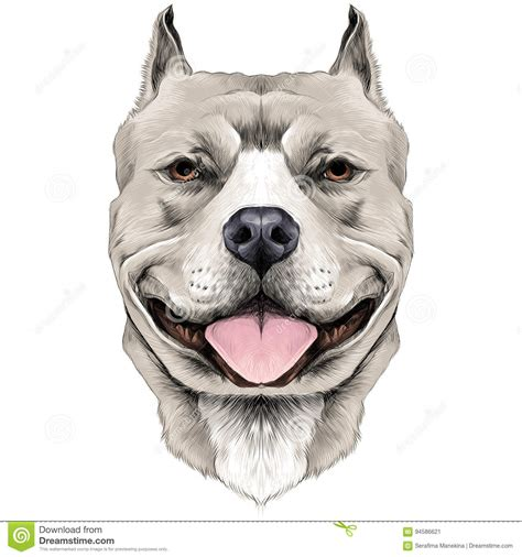 dog head sketch vector stock vector illustration