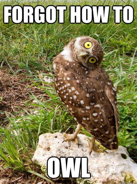 Owl Birthday Meme - site unavailable
