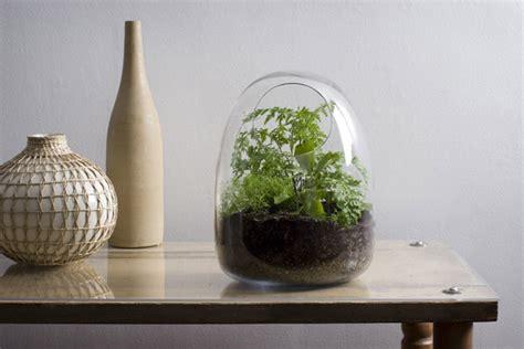 blown terrarium hand blown glass terrariums from bevara design