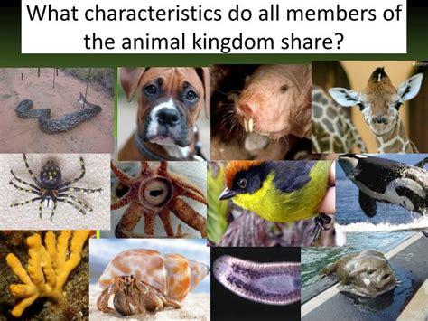 kingdom animalia part  powerpoint