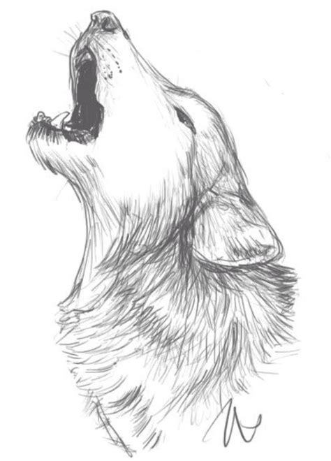 wolf drawing idea drawings   wolf sketch animal