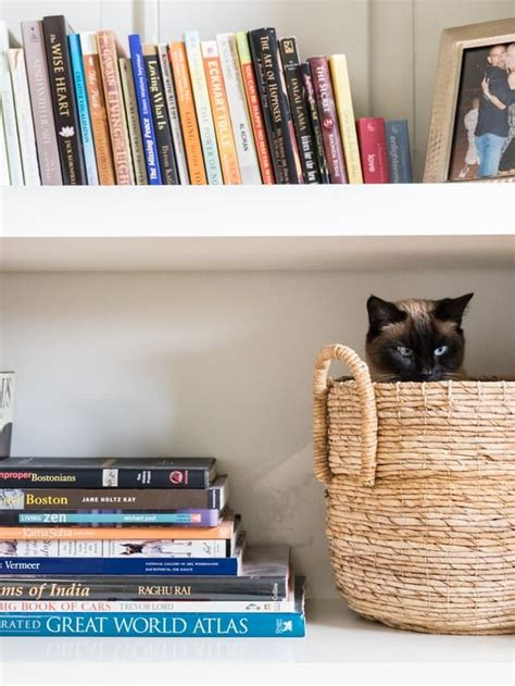 The Living Room Or Not Cat by How To Make A Small Apartment More For Your Cat Cat