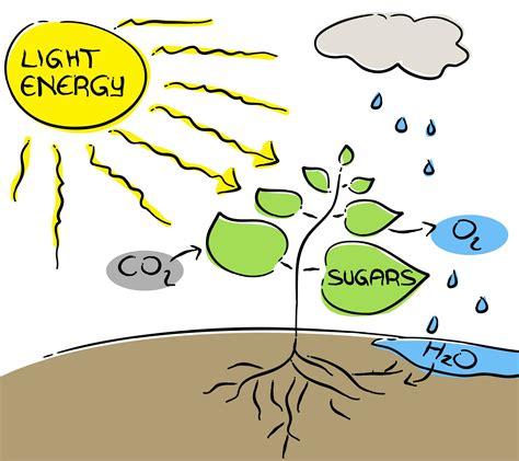 Yakima Valley brings the heat for photosynthesis | wineeyak