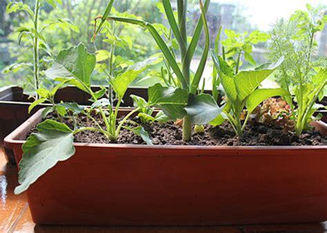 Gemüse Im Balkonkasten by Gem 252 Se Das Sich Im K 252 Bel Lohnt R 252 Ben
