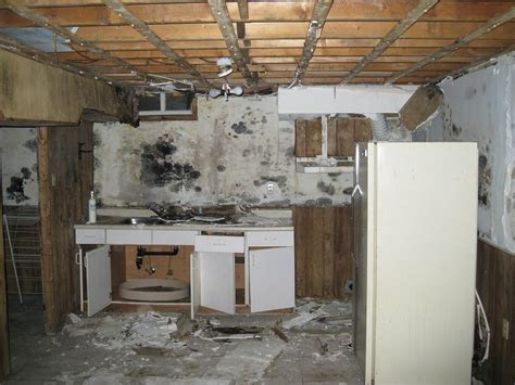 mould remediation envirosolve canada
