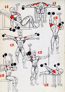 This A Simple Exercises For The Begining U0026 39 S Bodybuilding