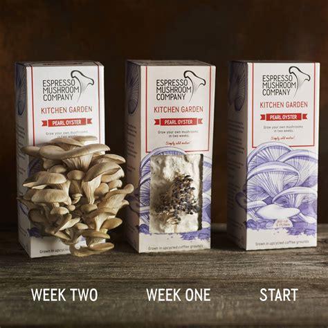 grow your own mushrooms pearl oyster grow your own mushroom kit by espresso mushroom company notonthehighstreet com