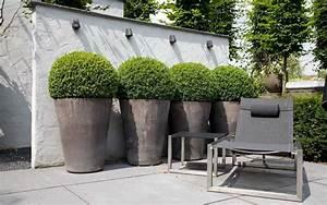 Awesome Siepe In Vaso Per Terrazzo Contemporary - Idee Arredamento ...