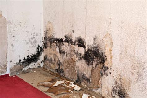 mauerwerk sanieren anleitung gartenhaus selbst mauern 187 anleitung in 3 schritten