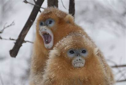 Monkeys Eat Winter Warm Fats Keep Carbs
