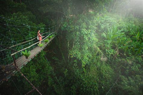 engaging rainforest  pexels  stock